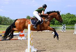 Catégorie Équitation